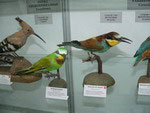 Zoological Museum, Bishkek